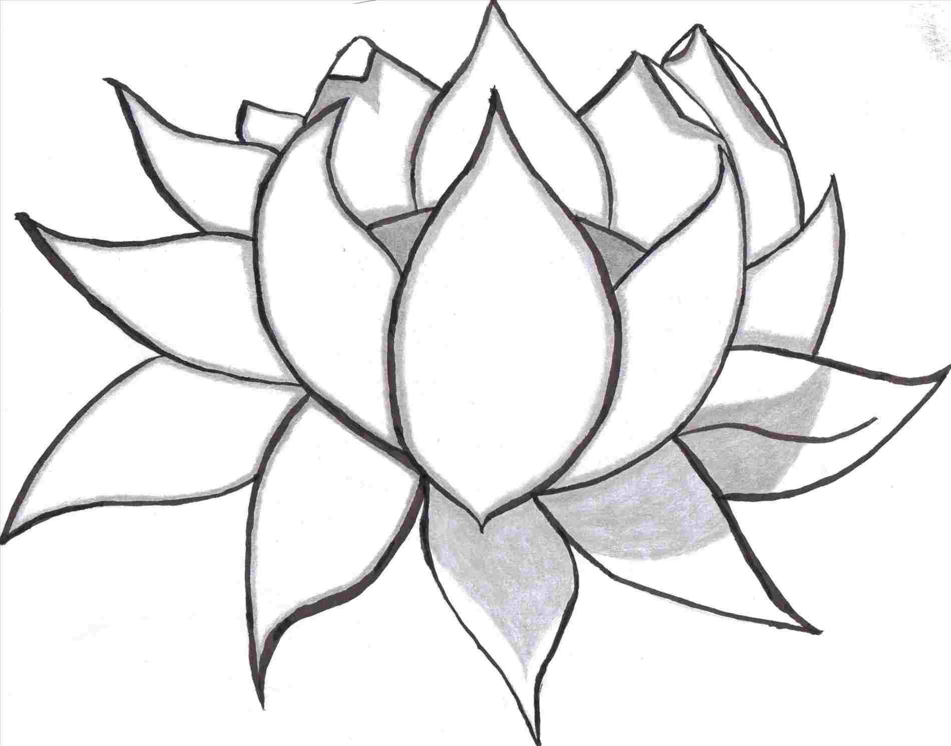 1900x1491 Flower