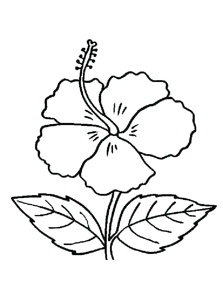 750x1000 printable hibiscus coloring pages hibiscus coloring pages hibiscus