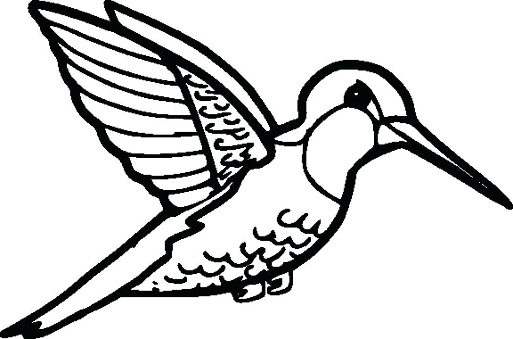 Collection of Hummingbird clipart   Free download best ...