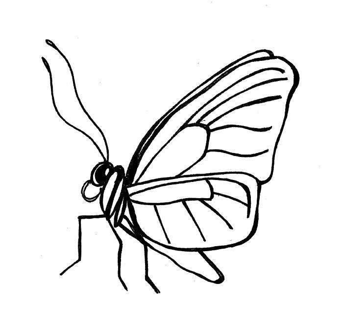 700x632 simple insect and flower line drawings drawing flower line