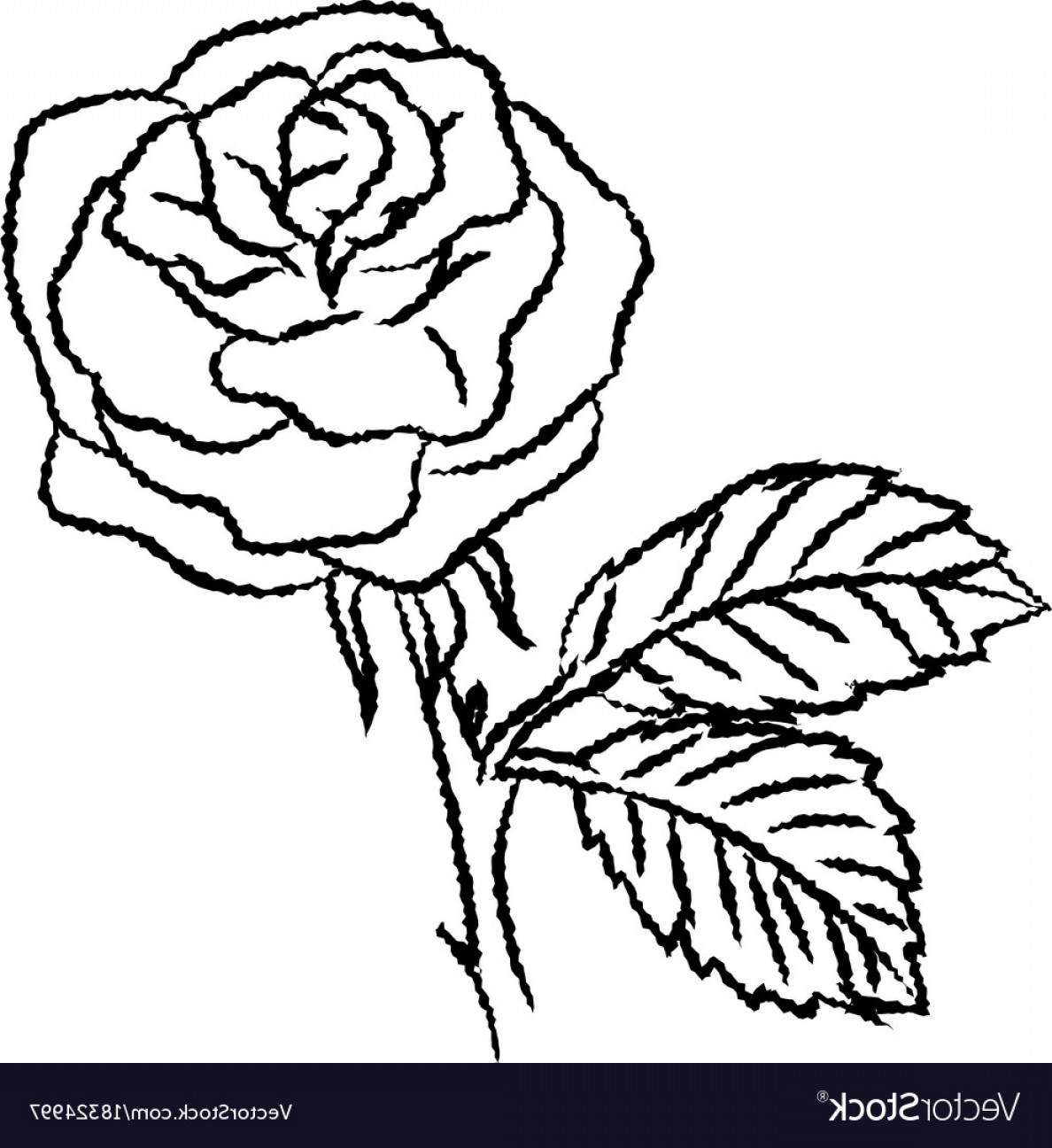1188x1296 Line Drawing Of Rose Simple Line Vector Soidergi
