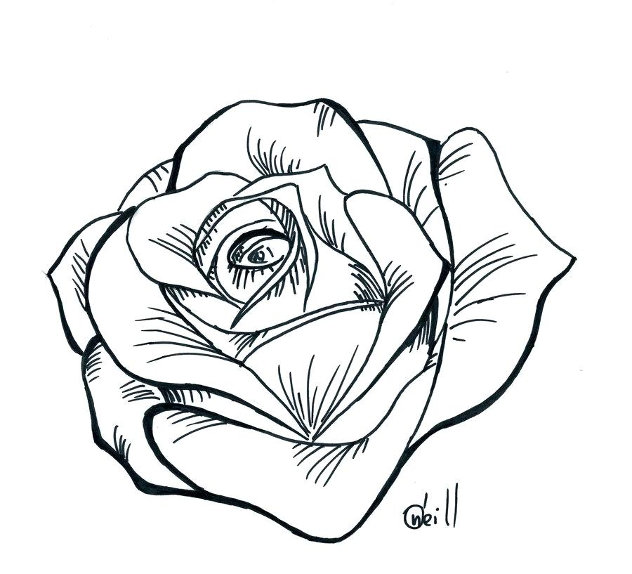 900x817 Rose Line Drawing How Draw A Simple View How Simple Rose Bud Line