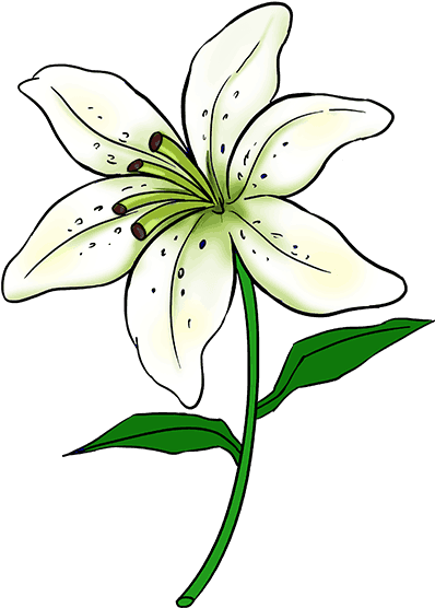 398x556 Hd How To Draw A Lily Step