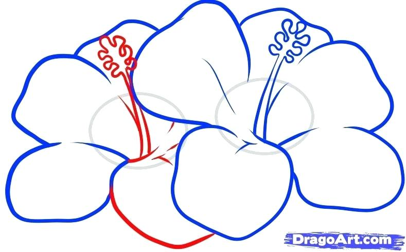 789x490 How To Draw Flowers Step