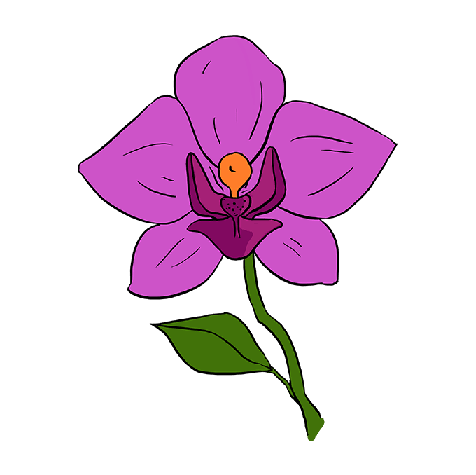 680x678 How To Draw A Beautiful Orchid