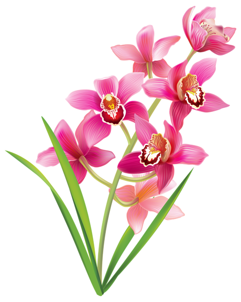 479x600 Flowers Orchids, Simple Flower