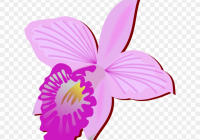 200x140 + Good Orchid Flower Drawing This Week Averro Fhd Wallpaper
