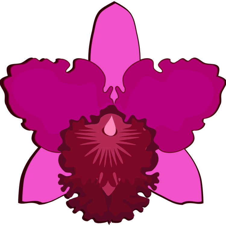 750x750 Collection Of Free Orchids Drawing Easy Download On Ui Ex