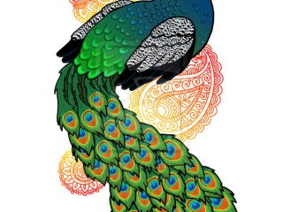 320x240 colour picture of peacock peacock drawing with colour