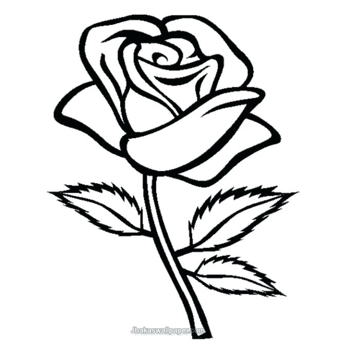 658x671 Easy Drawing Of A Rose Cool Drawings Of Roses And Flowers Easy