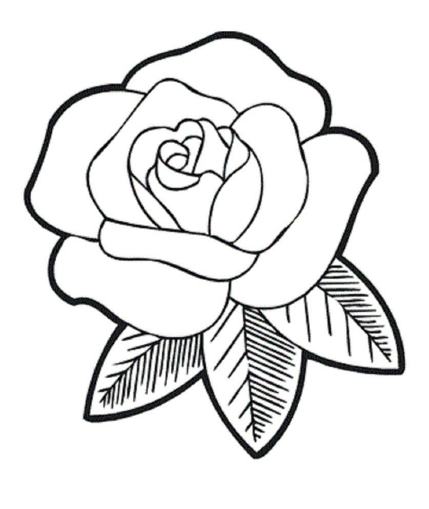 837x992 Simple Rose Line Drawing Photo Album
