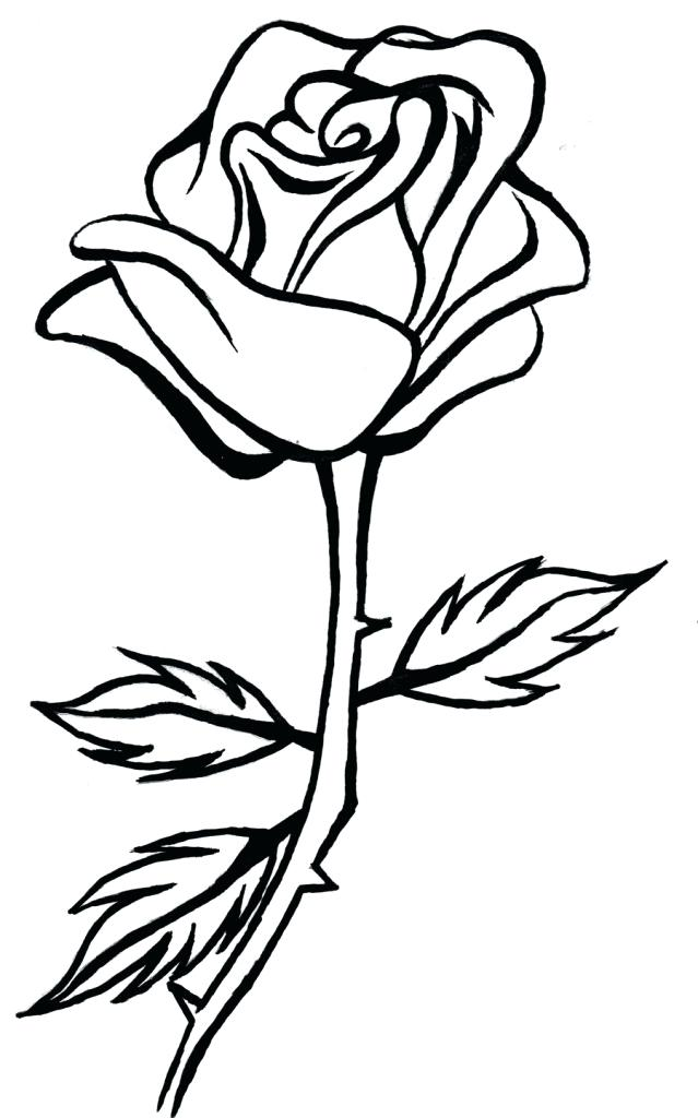 639x1024 Simple Rose Drawings