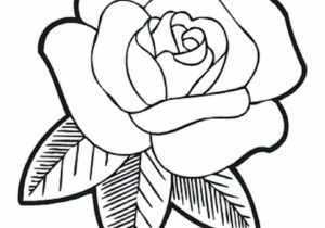 300x210 Rose Flower Drawing Images Drawing A Rose Flower With Simple