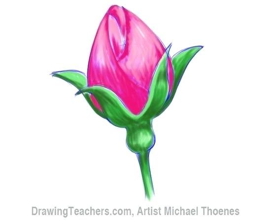 550x447 Simple Rose Bud Drawing How To Draw A Rosebud Simple Rose Bud
