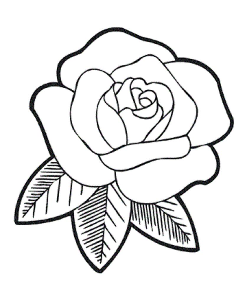 837x1024 Simple Rose Drawings