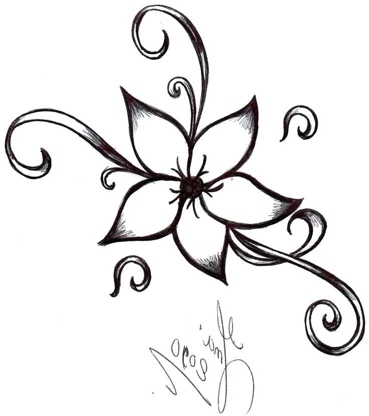 736x830 Rose Drawing Step