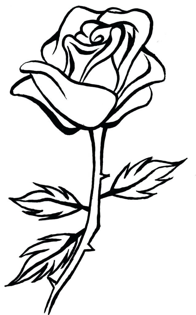 639x1024 Roses Line Drawing
