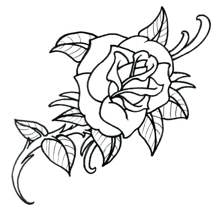 736x699 Drawing Of Simple Rose Simple Rose Flower Drawing Images Zupa