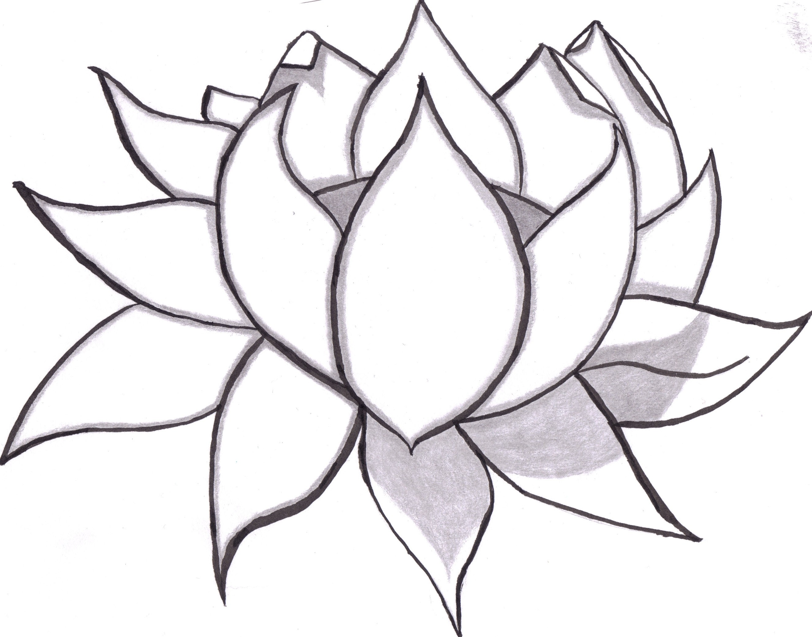 2646x2077 Easy To Draw Rose Fresh Rose Flower Drawing Simple Flowers Healthy