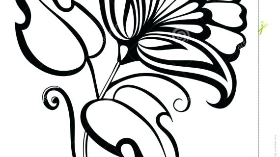 570x320 Rose Drawing Simple Rose Flower Drawing Instructions