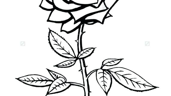 570x320 Simple Rose Drawing