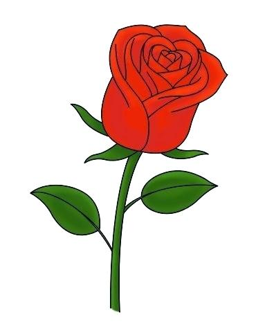 383x484 Draw Simple Rose Easy Rose Drawing How To Draw A Simple Rose