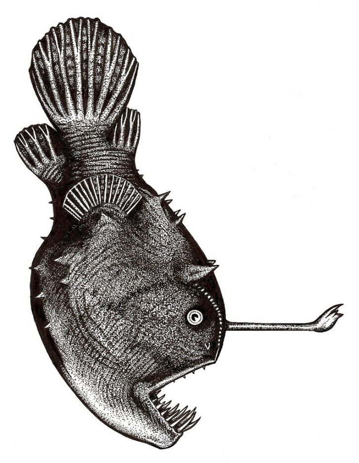 728x939 Angler Fish Drawing Easy Colour Simple Step