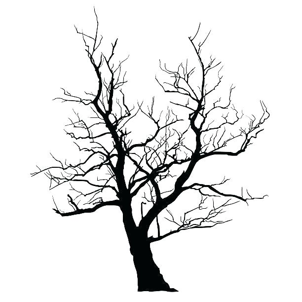 612x612 bare tree drawing trunks of bare trees graphic drawing simple bare