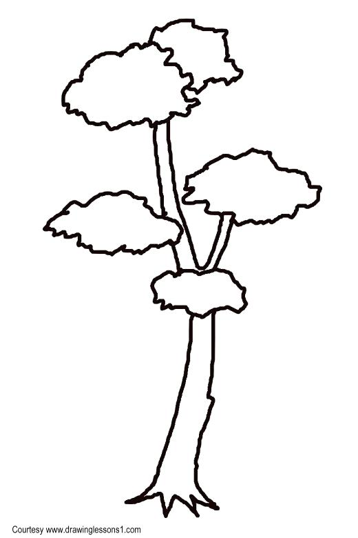 520x780 How To Draw A Simple Tree How To Draw A Simple Tree Step Draw