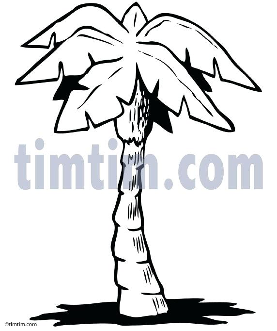 572x682 Palm Tree Line Drawing Adding The Leaves To The Second Tree Simple