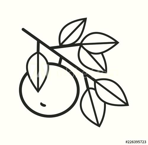 500x489 Simple Apple Drawing Line Drawing Of Apples Simple Line Vector