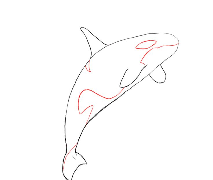736x623 how to draw a killer whale boredom whale drawing, whale