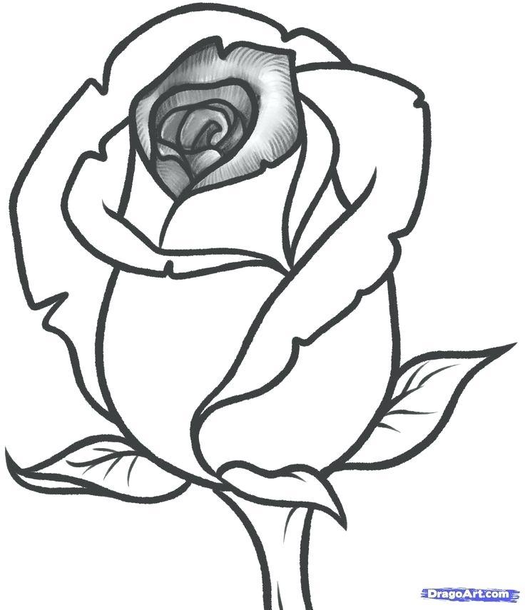 736x855 Draw A Rose Step