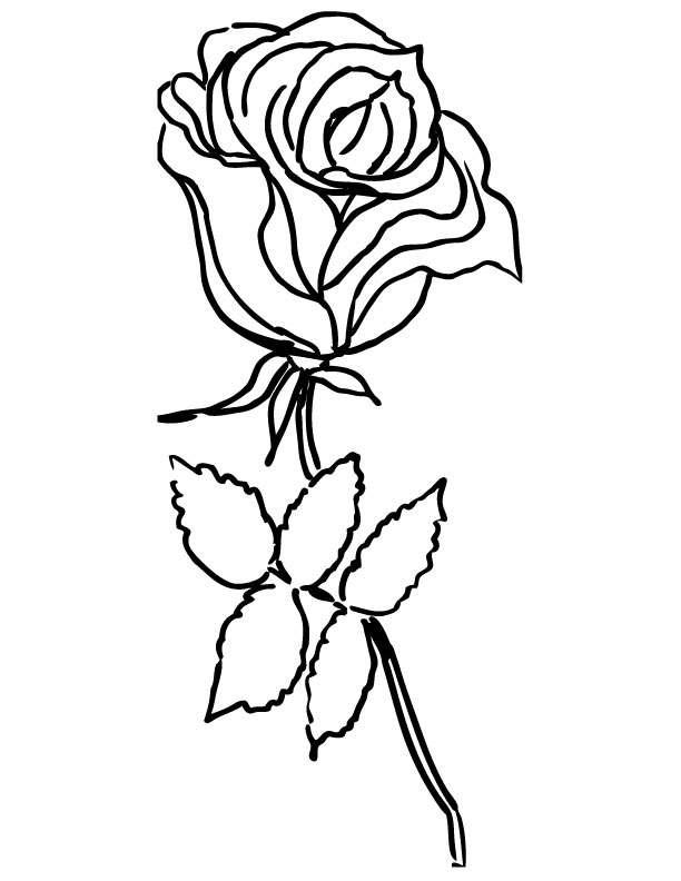 612x792 Images Of Simple Single Rose Outline