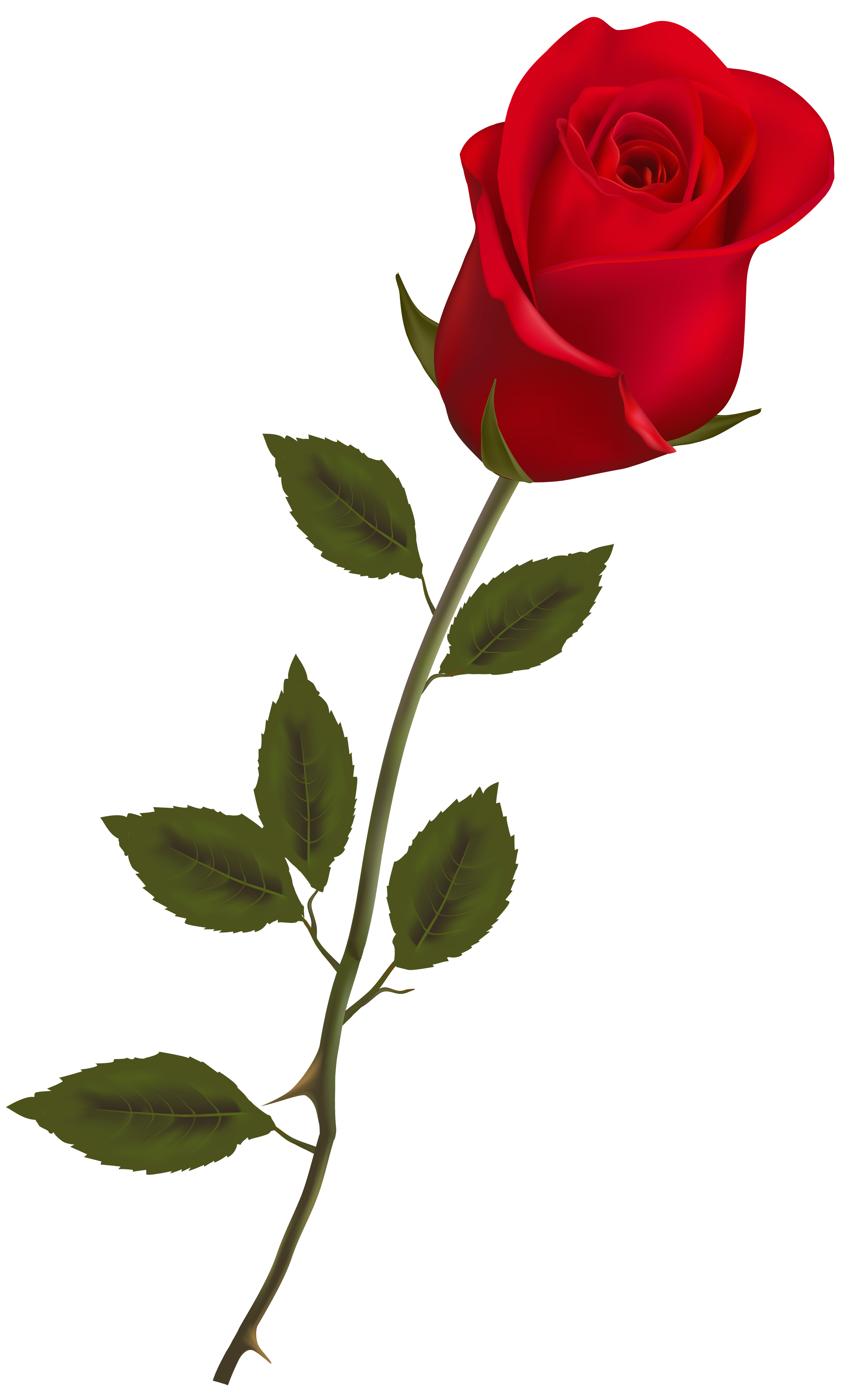 3064x5000 Lions Red Rose Png, Red Roses