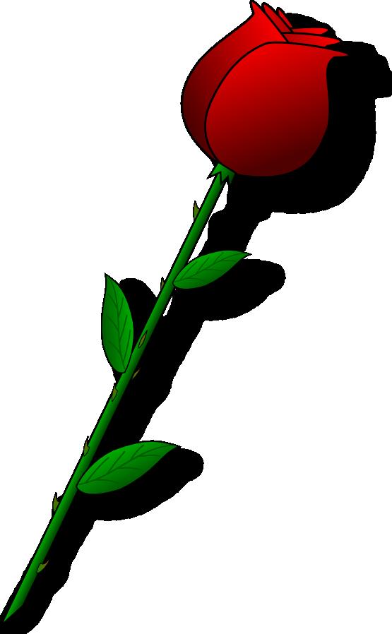 555x898 Stem Drawing Rose Flower Transparent Png Clipart Free Download