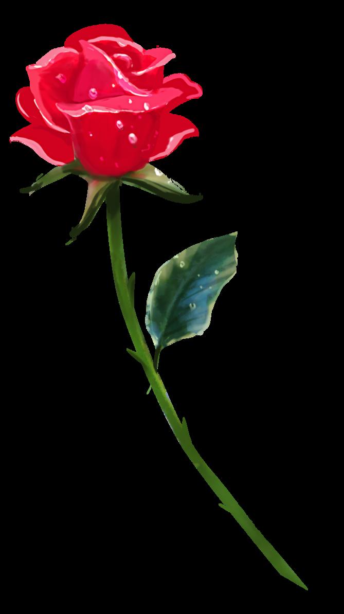 669x1194 A Single Rose