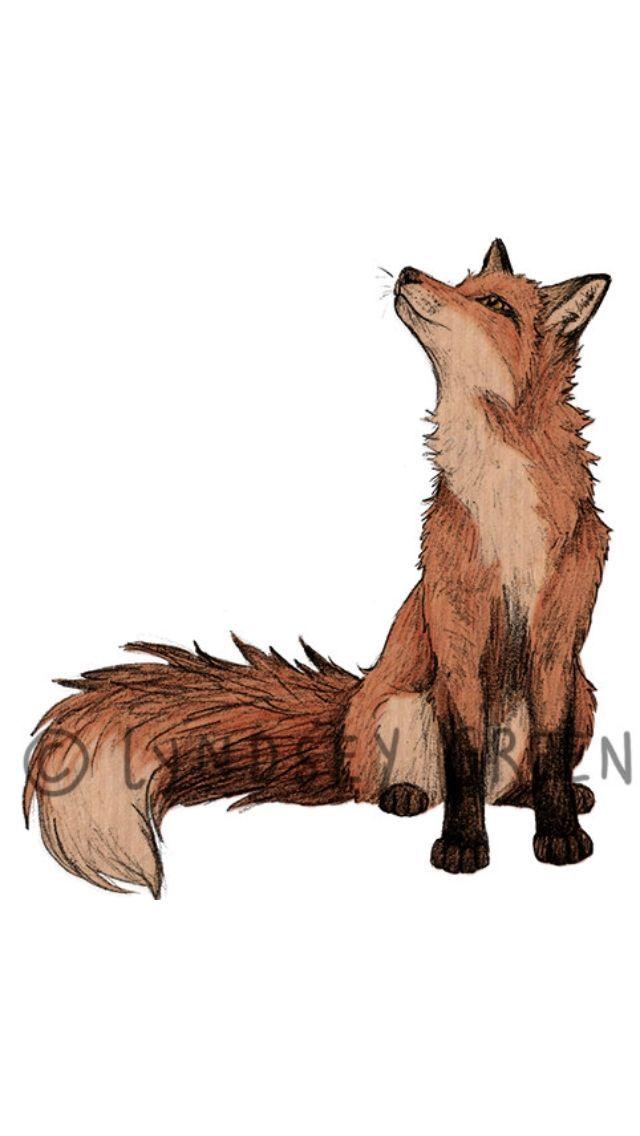 640x1136 Sitting Tattoo Fox Drawing