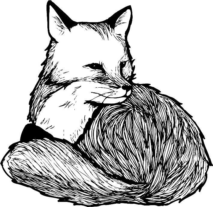 710x690 Sitting Fox