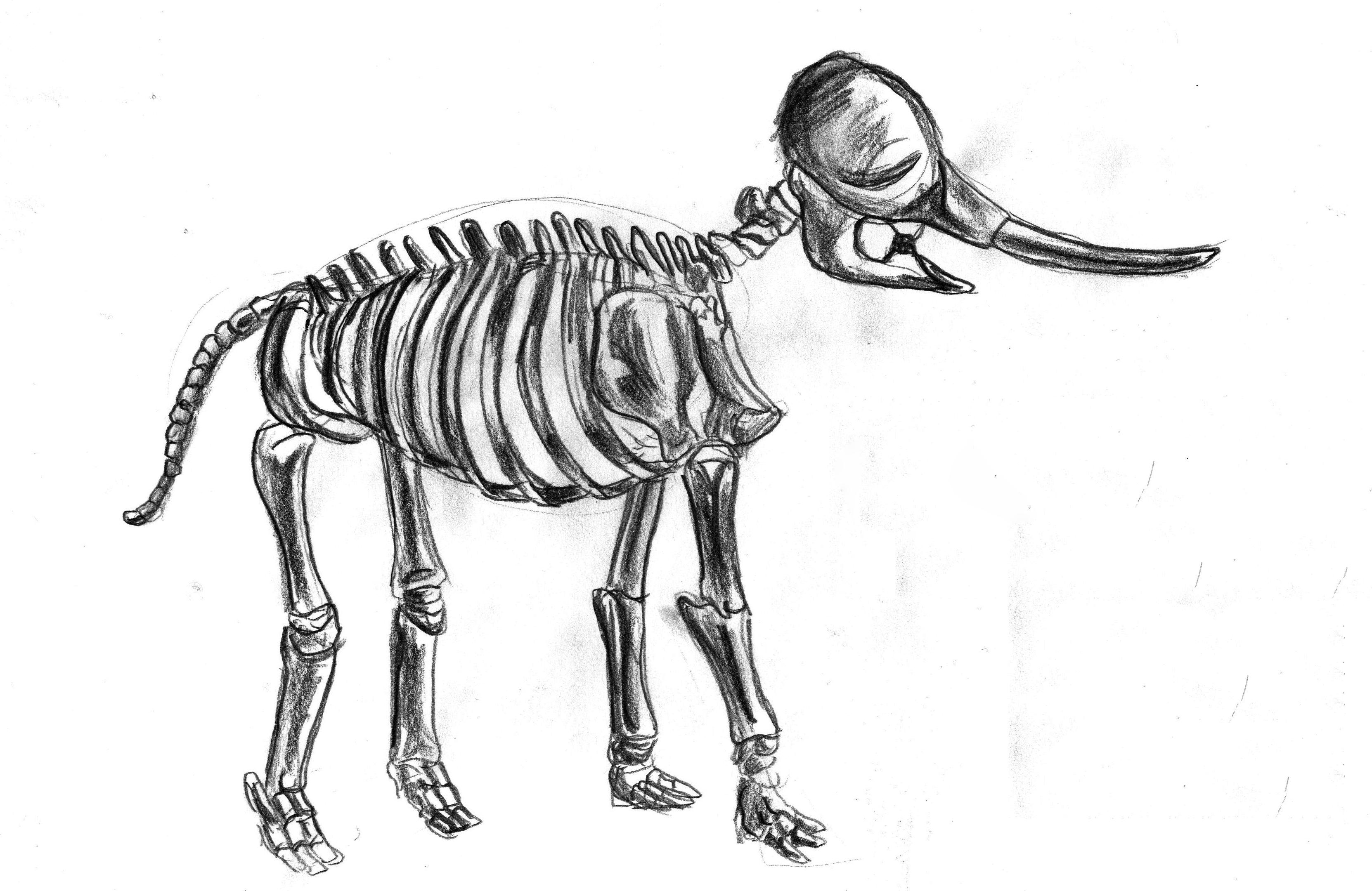3324x2160 Elephant Skeleton Faezghani
