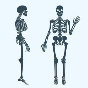 300x300 Photostock Vector Human Bones Skeleton Drawing Collection Set
