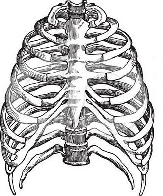 332x400 Real Heart Drawing