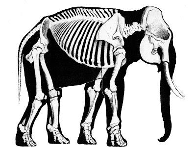 400x300 A History Of Skeletal Drawings Part