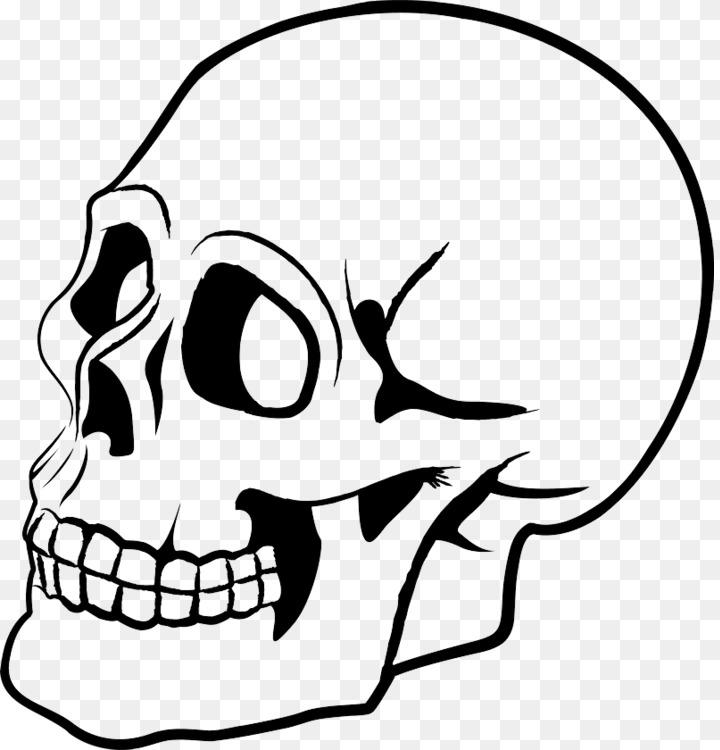 720x750 Skull Human Skeleton Drawing Bone Art Cc0