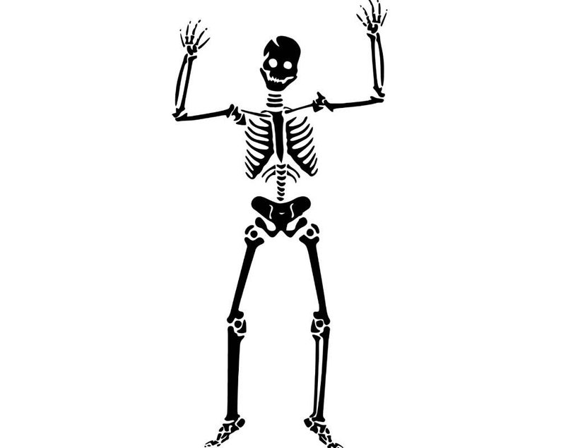 794x635 Vector Skeleton Illustration Isolated Skull Human Anatomy Etsy