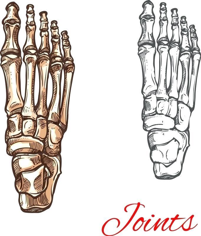 682x800 Skeleton Feet Easysurfer