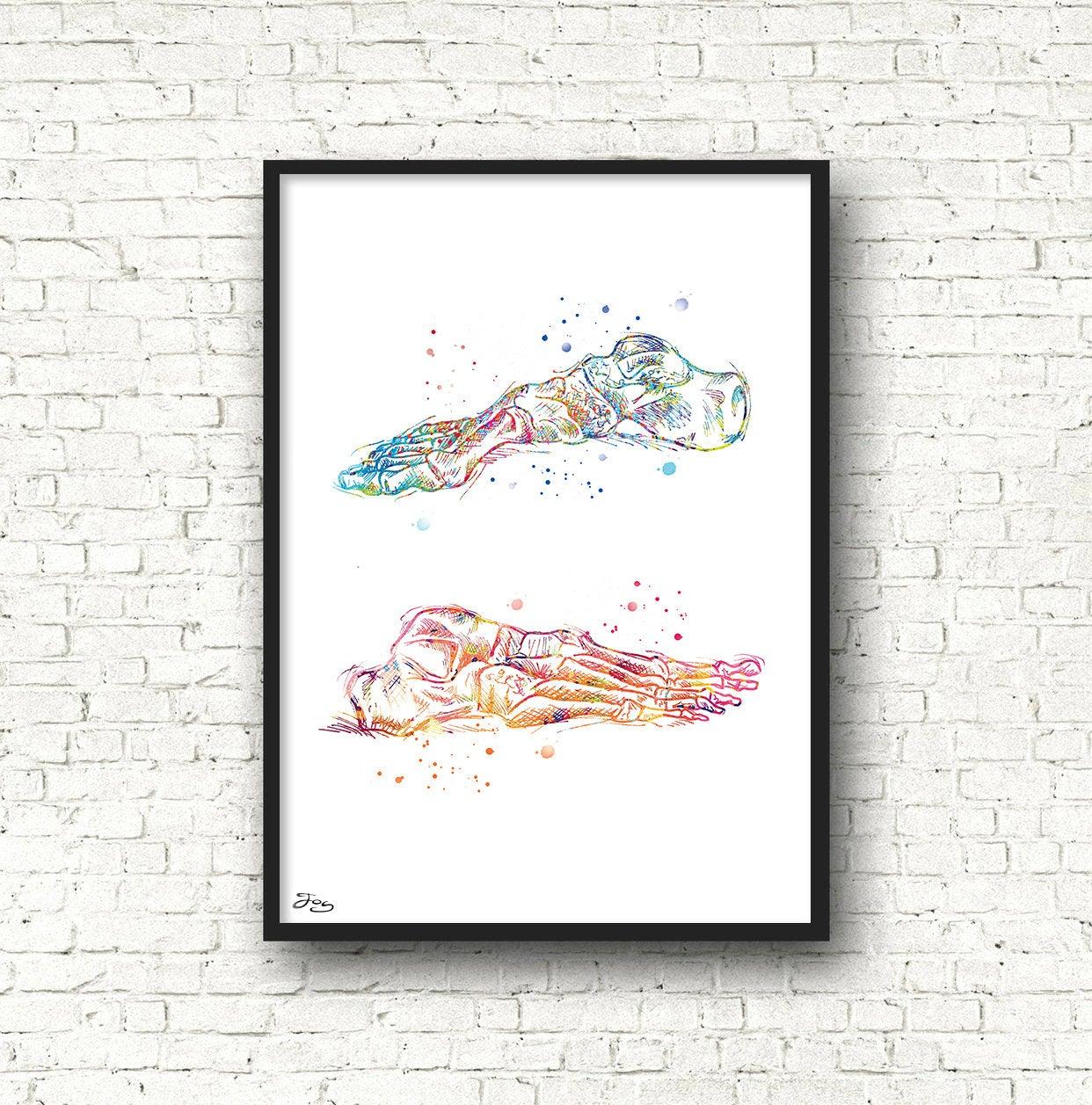 1242x1257 Base Design Medical Poster Bones Skeleton Anatomy Medical Etsy