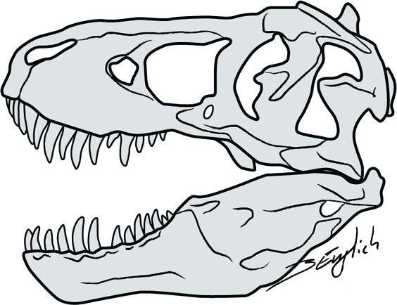 564x434 t rex skeleton drawing drawn tyrannosaurus bone x t rex skeleton