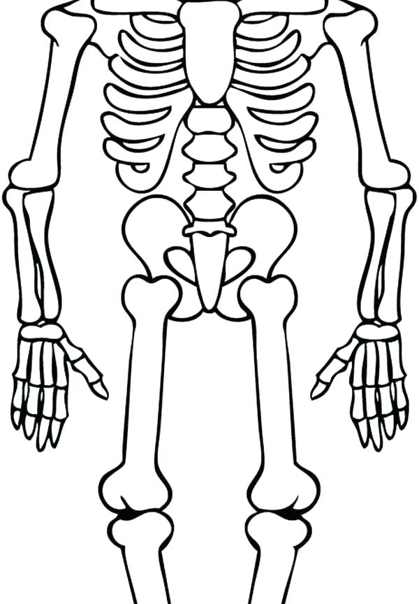 picture relating to Skeleton Printable named Skeleton Drawing For Little ones Cost-free obtain excellent Skeleton