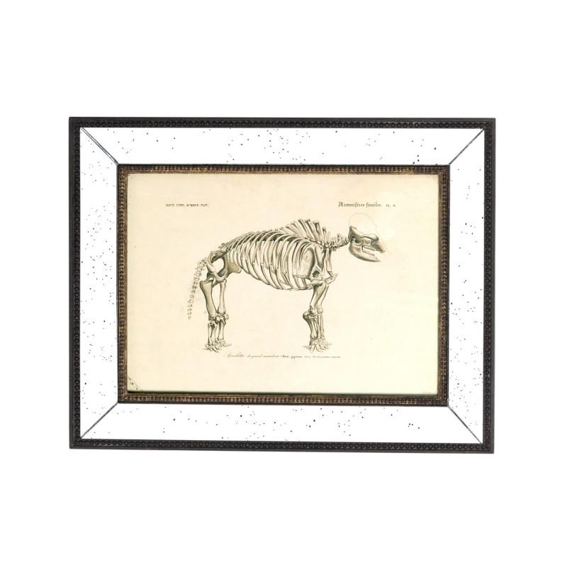 800x800 Mammal Skeleton Art Work